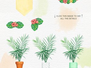 04 COMBINATIONS_Cacti and Plants