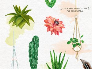 05 INDIVIDUALS_Cacti and Plants